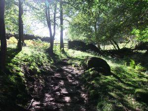 Path through Fletchers Wood