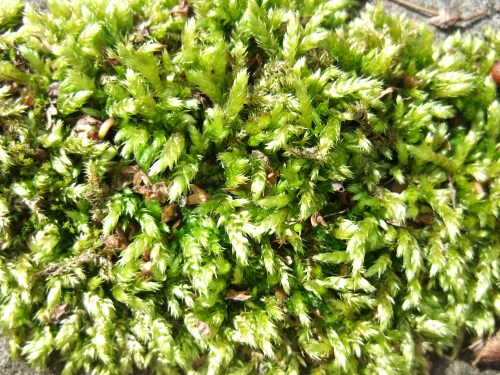 Moss on the patio