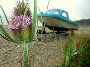 Monmouth beach flora