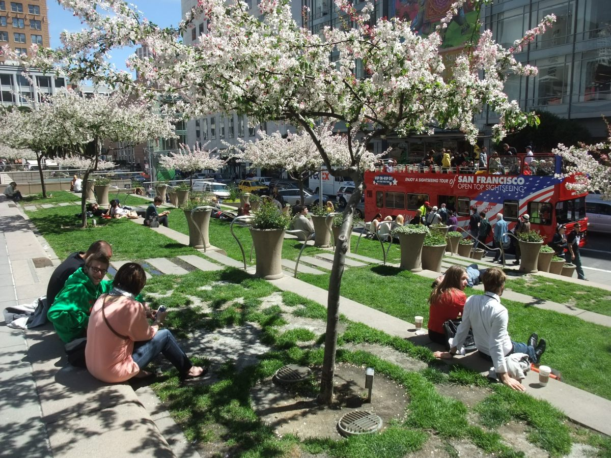 Springtime cherry blossom in Union Square