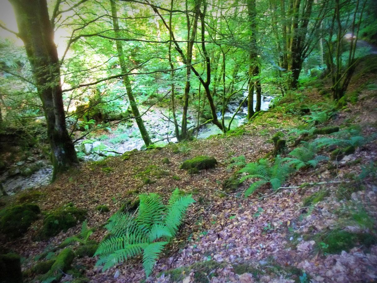 Leafy Heddon Valley footpath