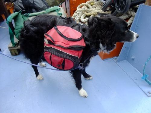 Munro Lassie