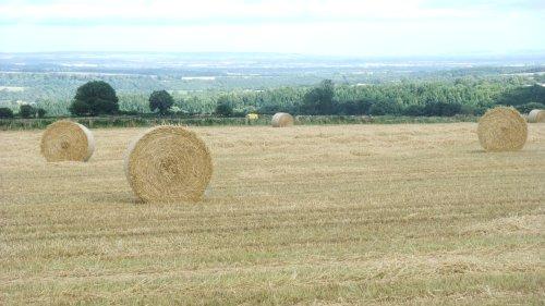 Productive farm land