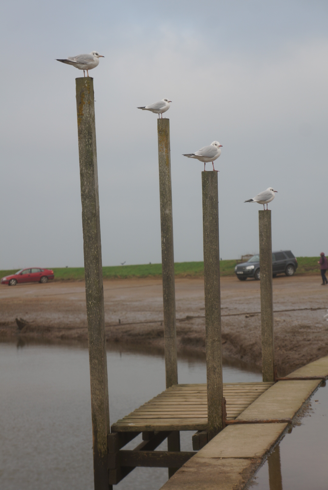 Erect any post and a bird will land on it