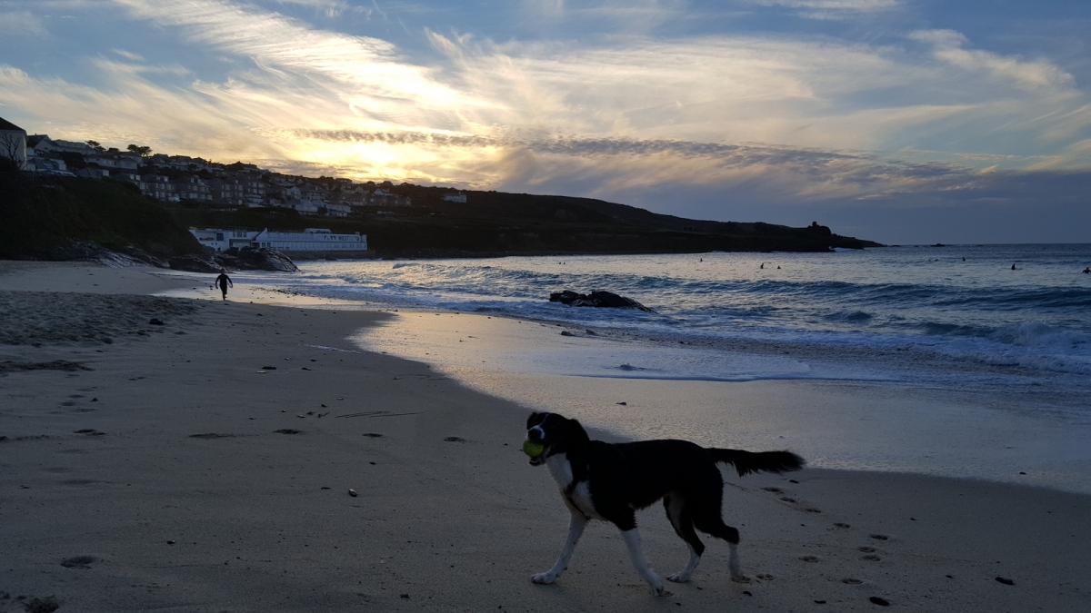 Lassie go home