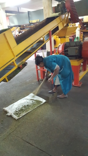 Yes, this woman really is is sweeping loose leaves from the floor and returning them to the conveyor…