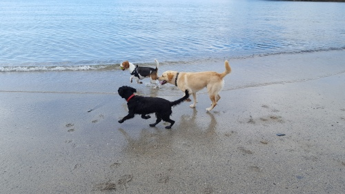 Nothing says Joy like dogs on a beach
