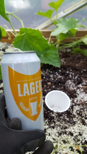 Cheap unbranded lager is perfect for slug traps